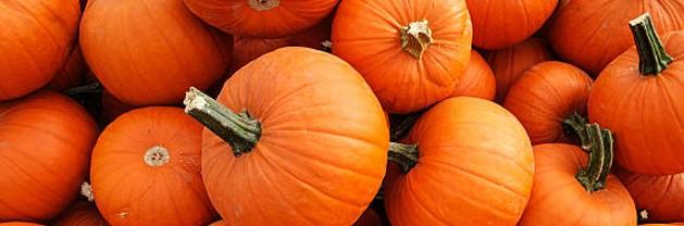 7th Annual Olde Towne Pumpkin Festival